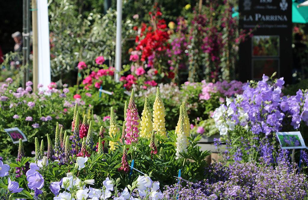 piante e fiori villa craven