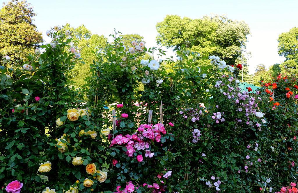 rose villa craven