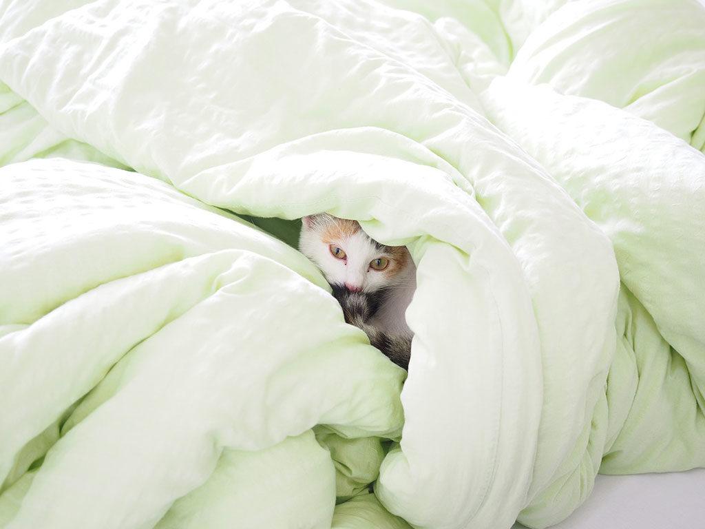 gatto nascosto piumino letto