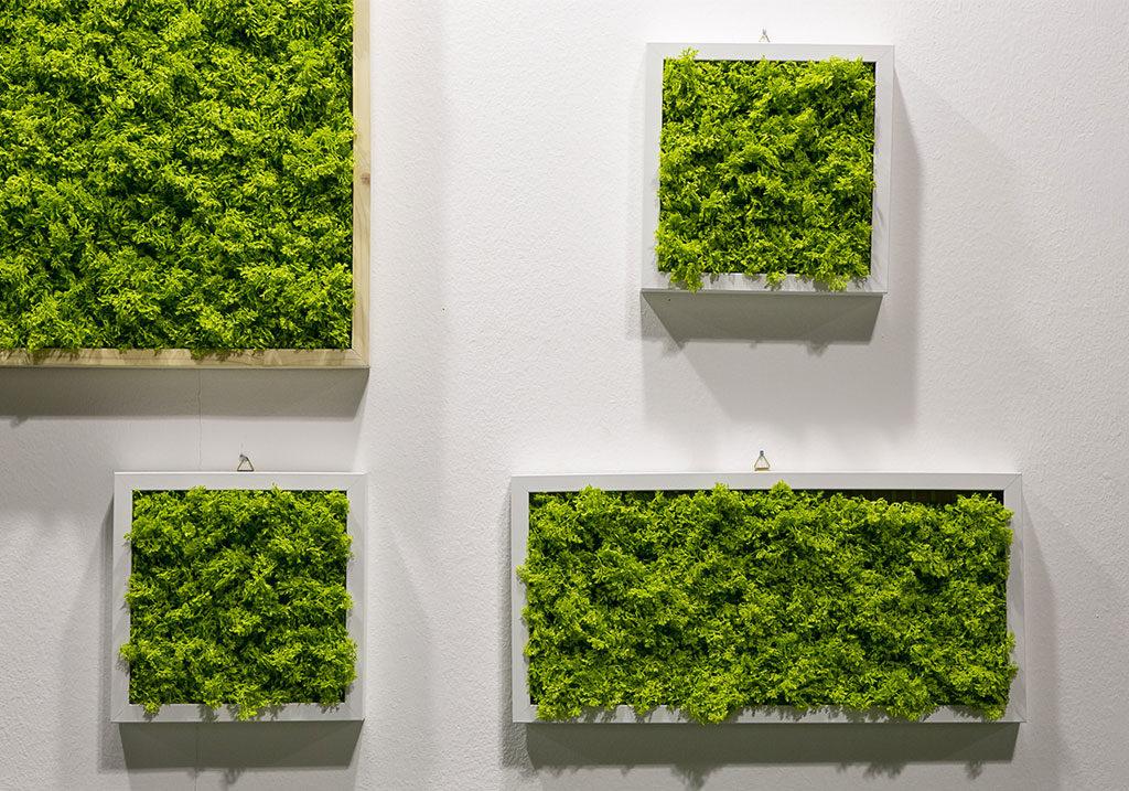 cornici con piante dentro