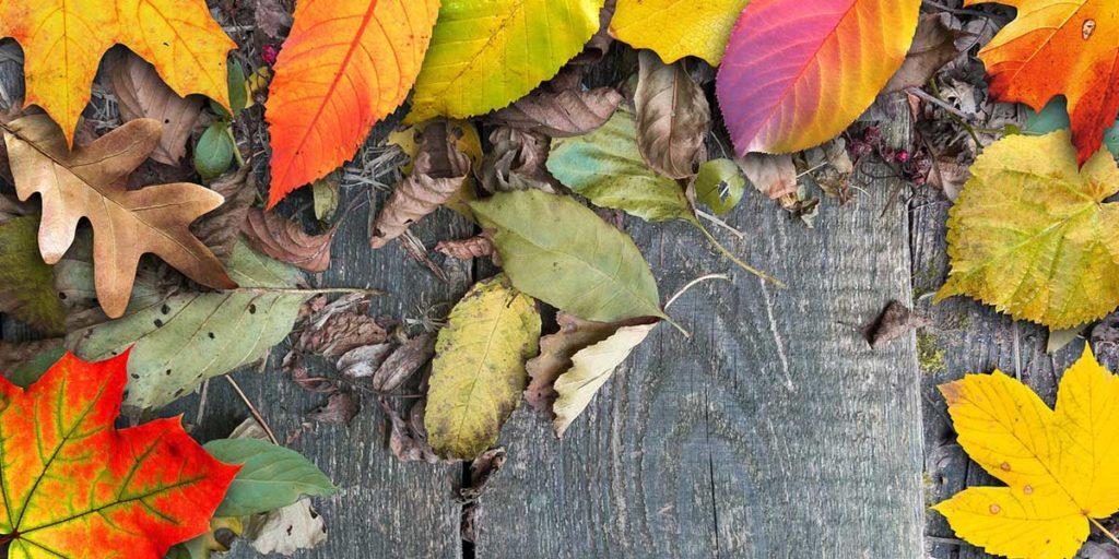 foglie autunno tavole legno