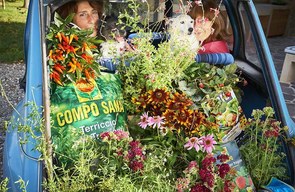baule auto fiori concime