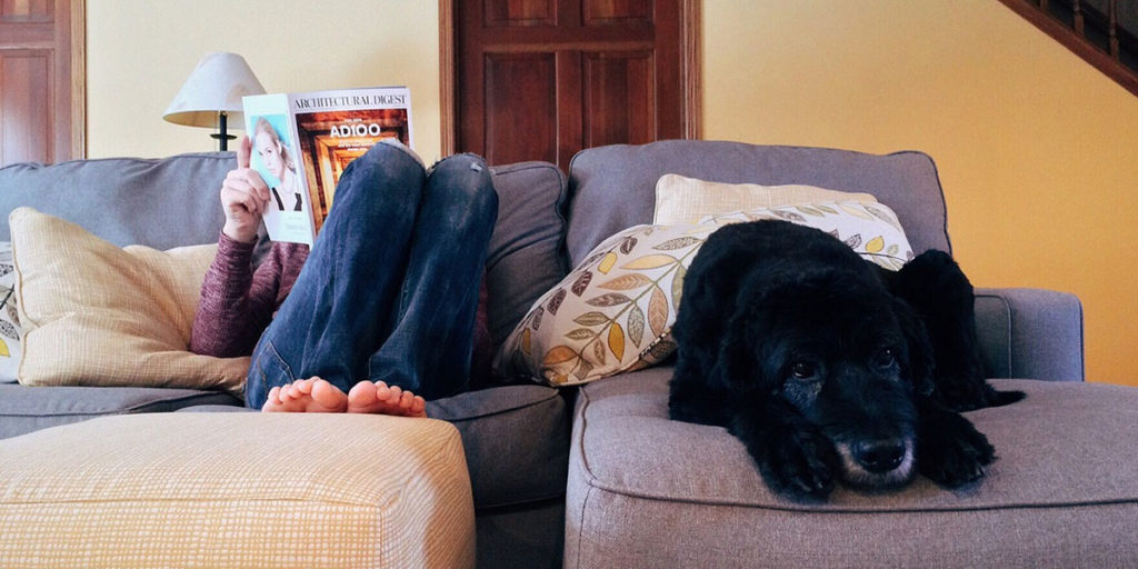 cane e padrone su divano