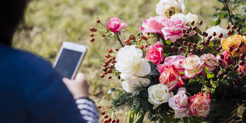 rose yougardener flower show