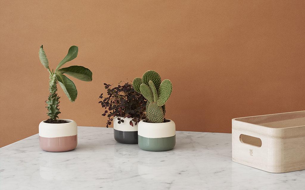 vasi piante indoor