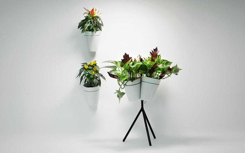 vasi piante indoor parete
