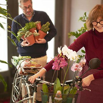 orchidee piante grasse cura casa