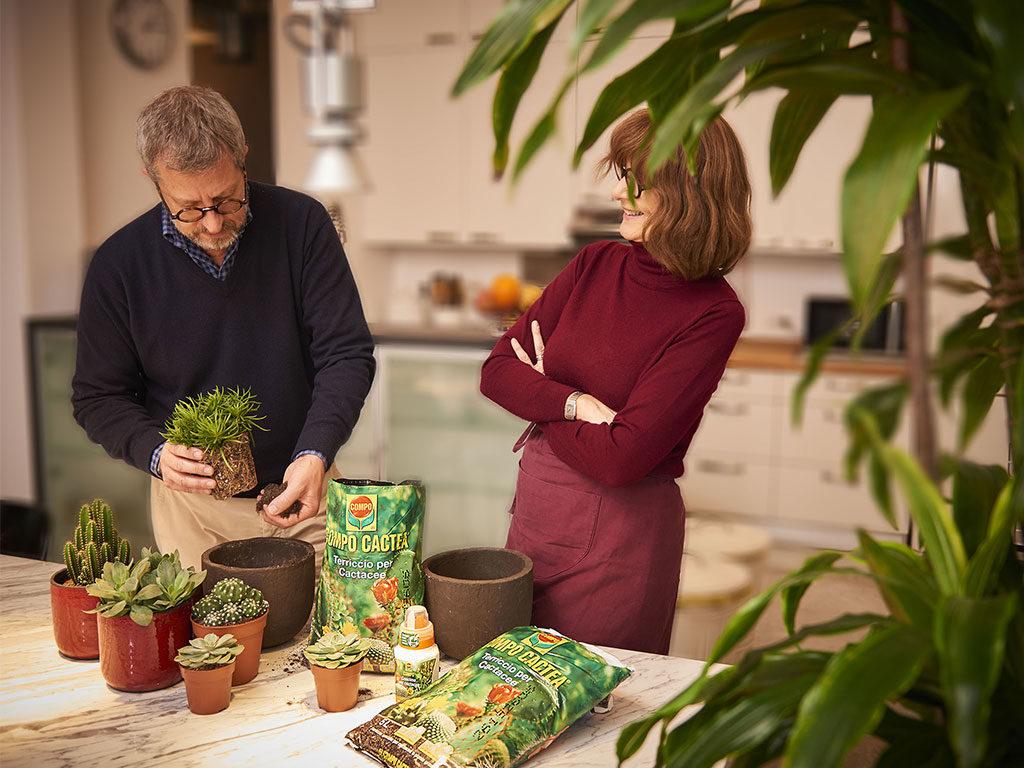 travasare piante grasse