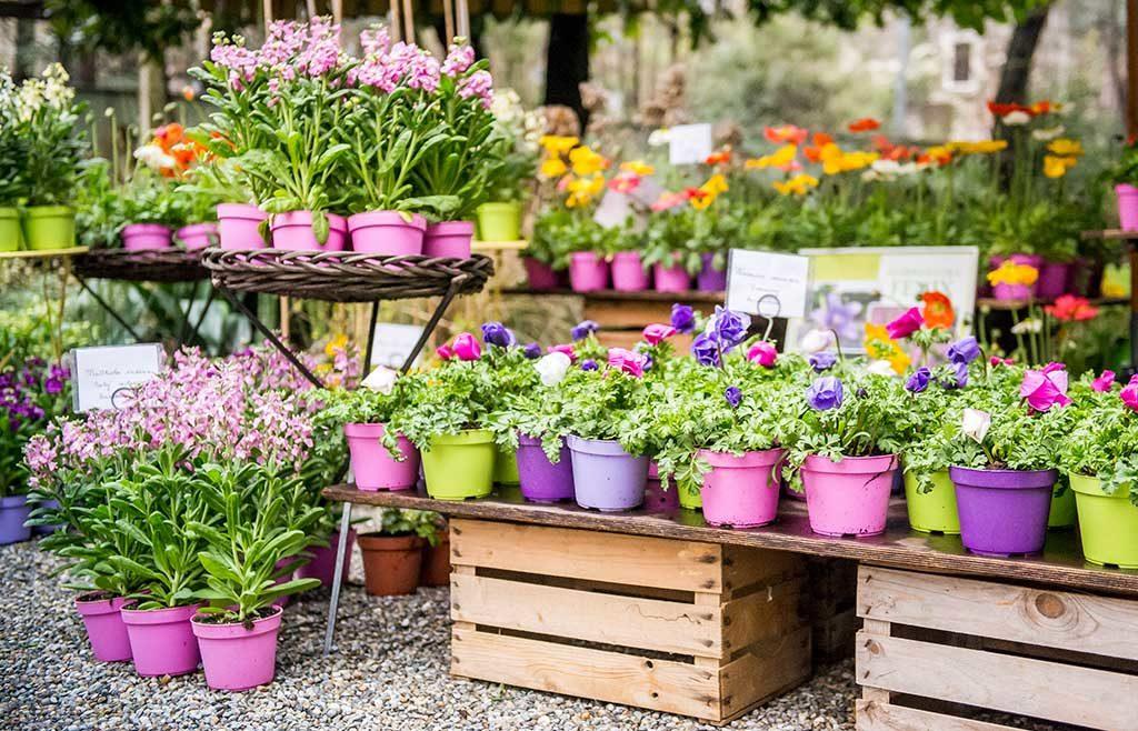 esposizione fiori vasetti