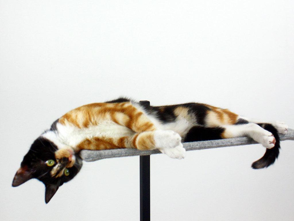 gatto su amaca