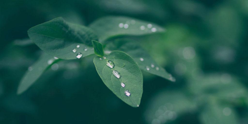 gocce acqua foglie