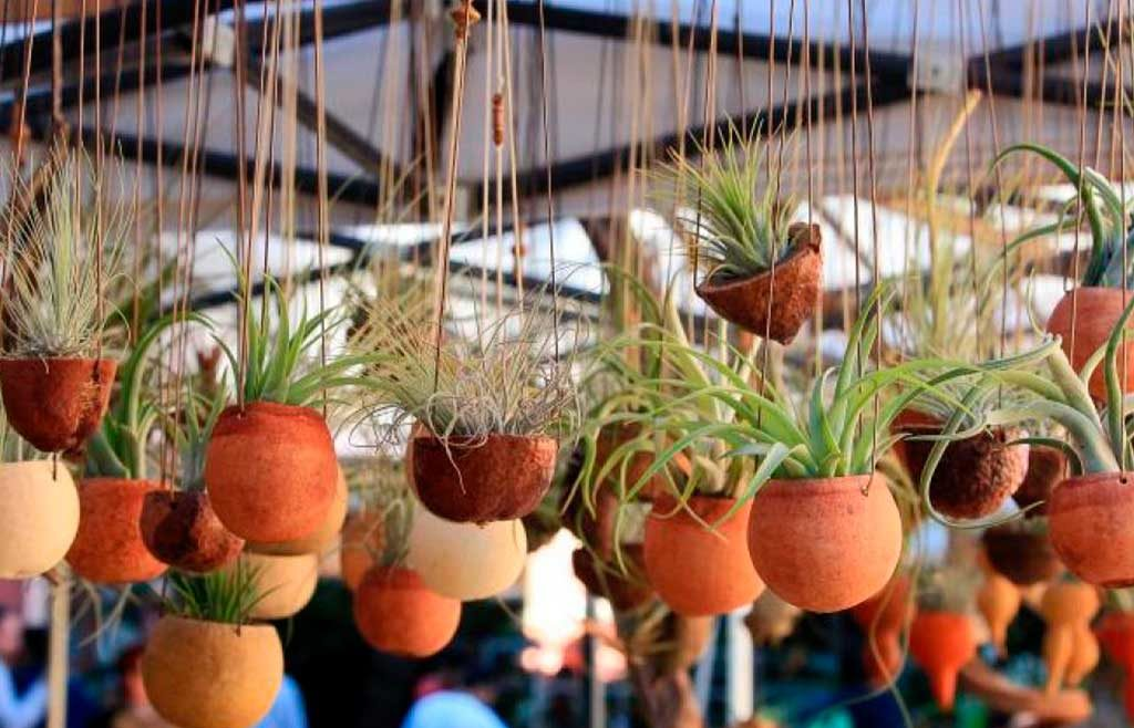piante grasse vasi sospesi