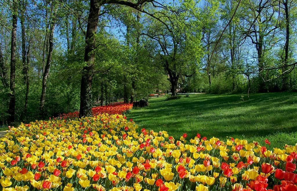 prato verde e fiori
