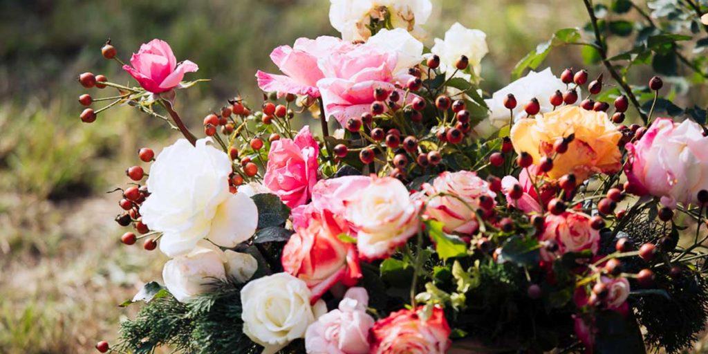 rose rampicanti giardino