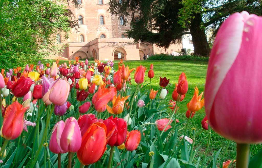 tulipani colorati sfondo castello