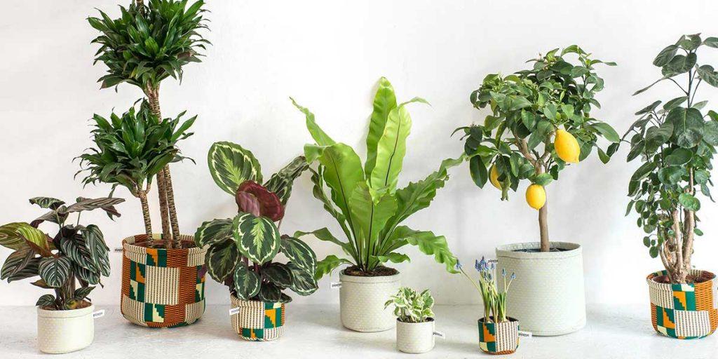 piante in vaso coprivasi tessuto