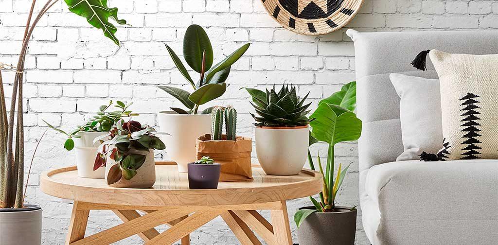 piante nel living