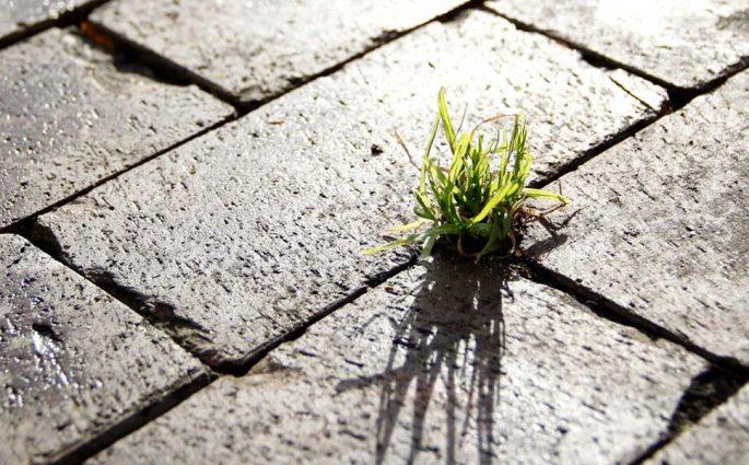 erba pavimento esterno