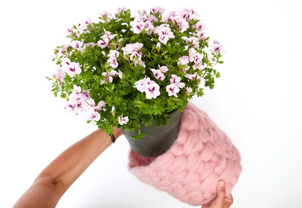 coprivaso lana rosa