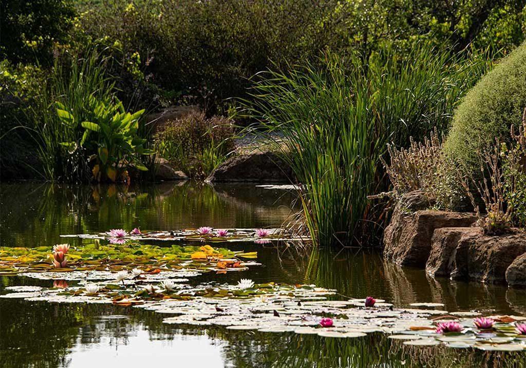 lago piante acquatiche