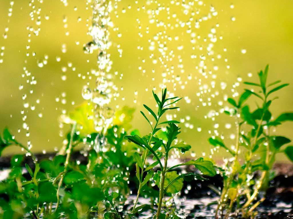 bagnare piante vaso