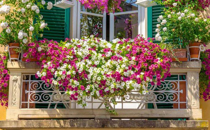 balcone fiorito colore