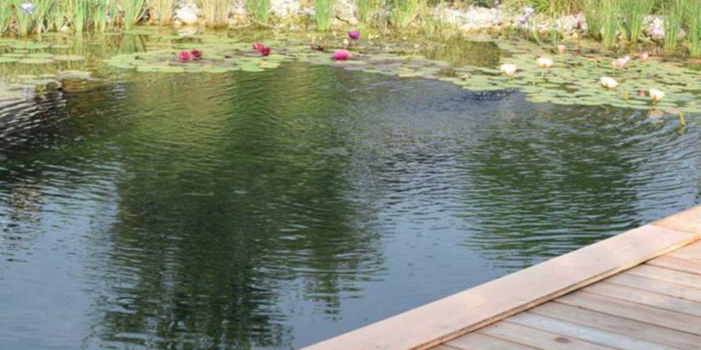 biolago piante acquatiche