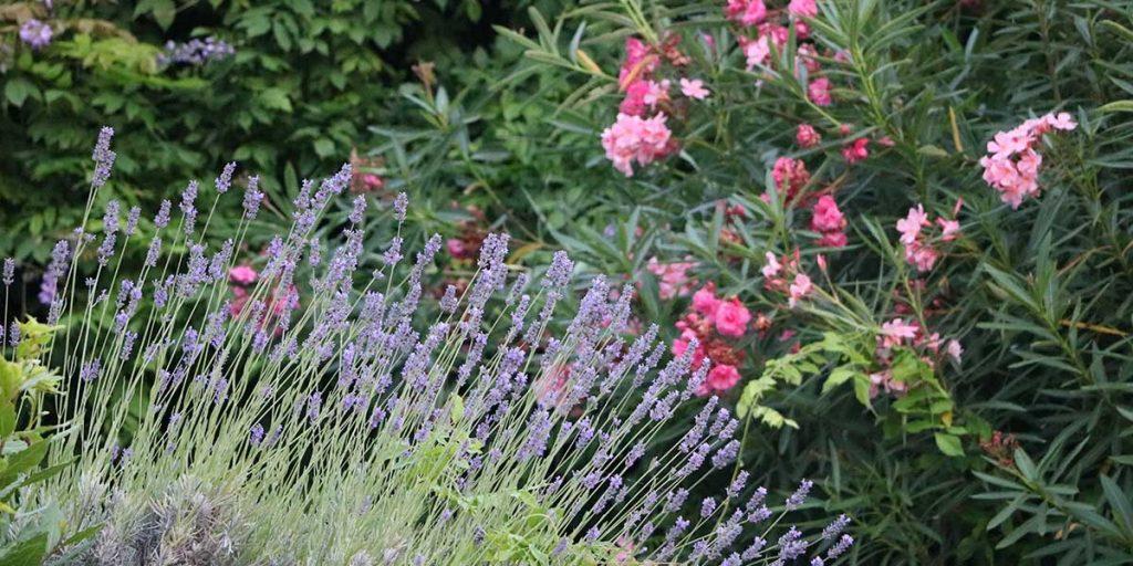 giardino fiorito con lavanda