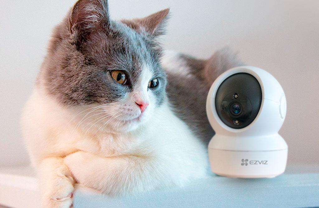 ezviz telecamera gatto mobile