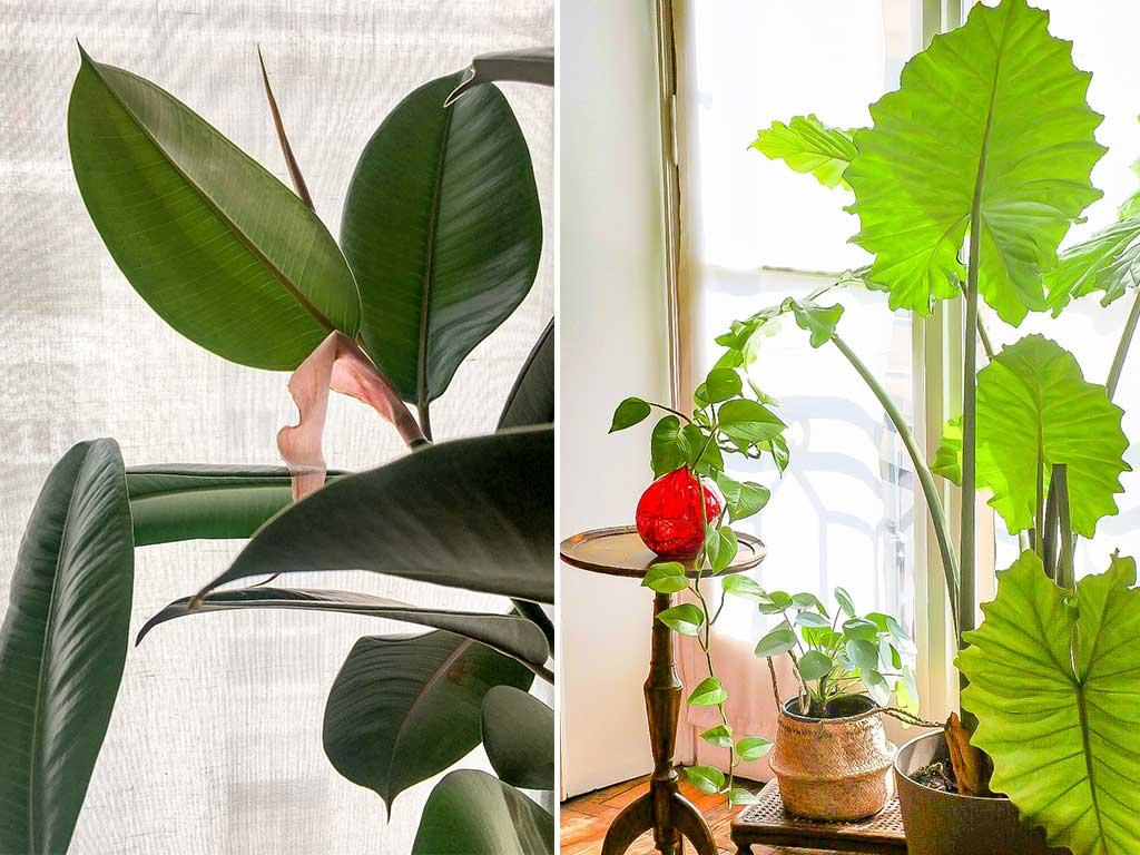 piante tropicali interno