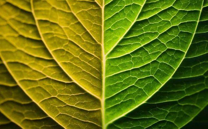 foglia green