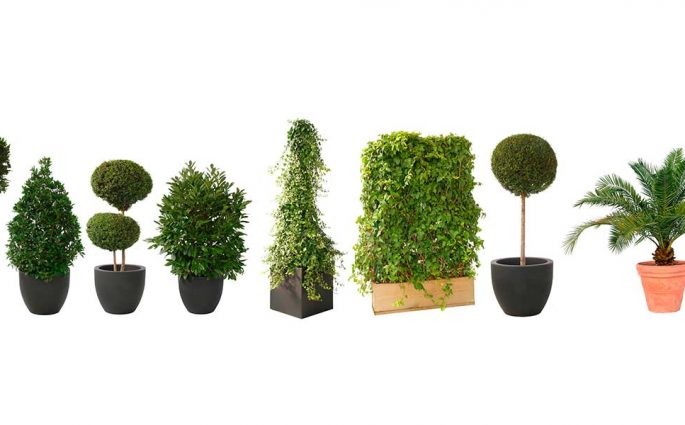 tipi vasi piante