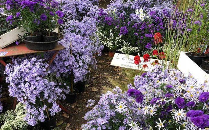 fiori mercatino verde