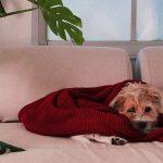 cane divano copertina rossa