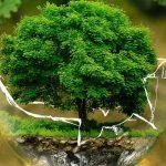 palla vetro pianta