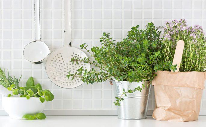 piante adatte alla cucina