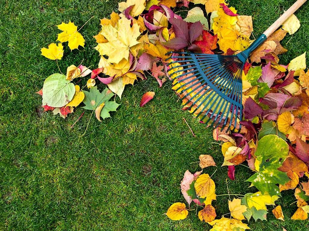 rastrello foglie prato