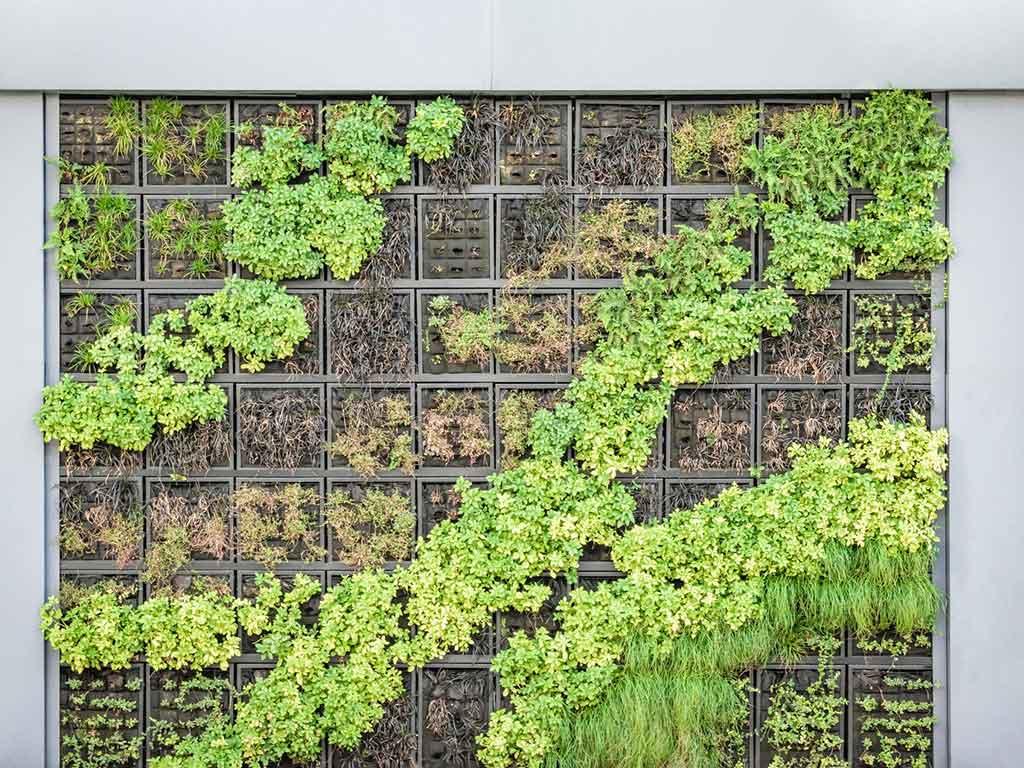 parete verde giardino verticale