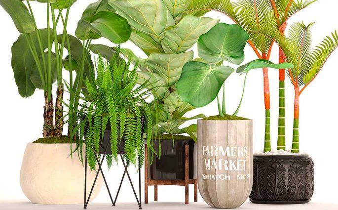 piante vaso indoor