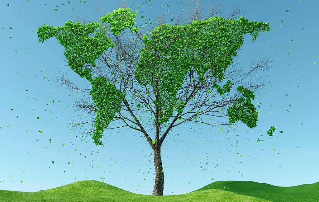 grafica albero mappamondo