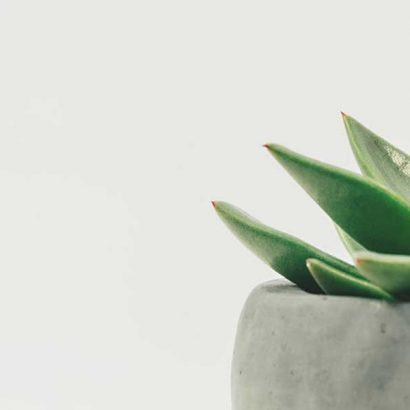 pianta grass vaso grigio cemento