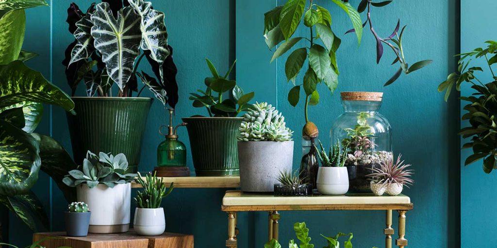 piante verdi da interno vaso