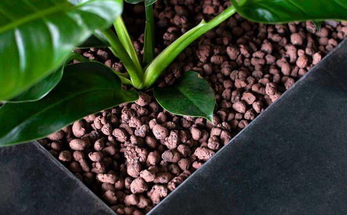 pianta verde vaso pavimento sopraelevato