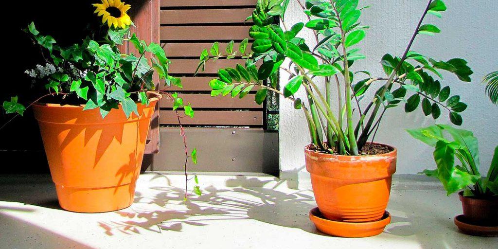 piante vaso terrazzo