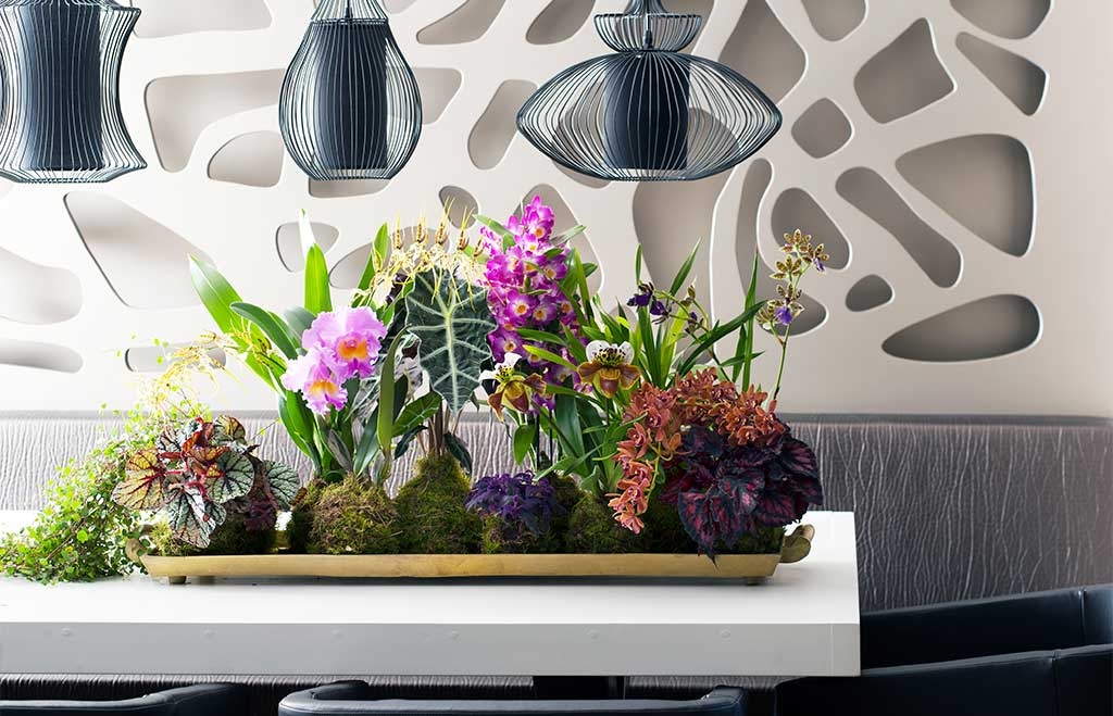 vassoio orchidee