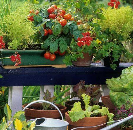 Colore e sapore con l'orto in balcone