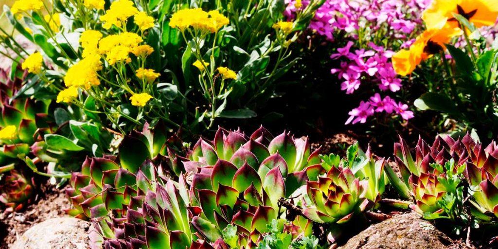 piante giardino roccioso