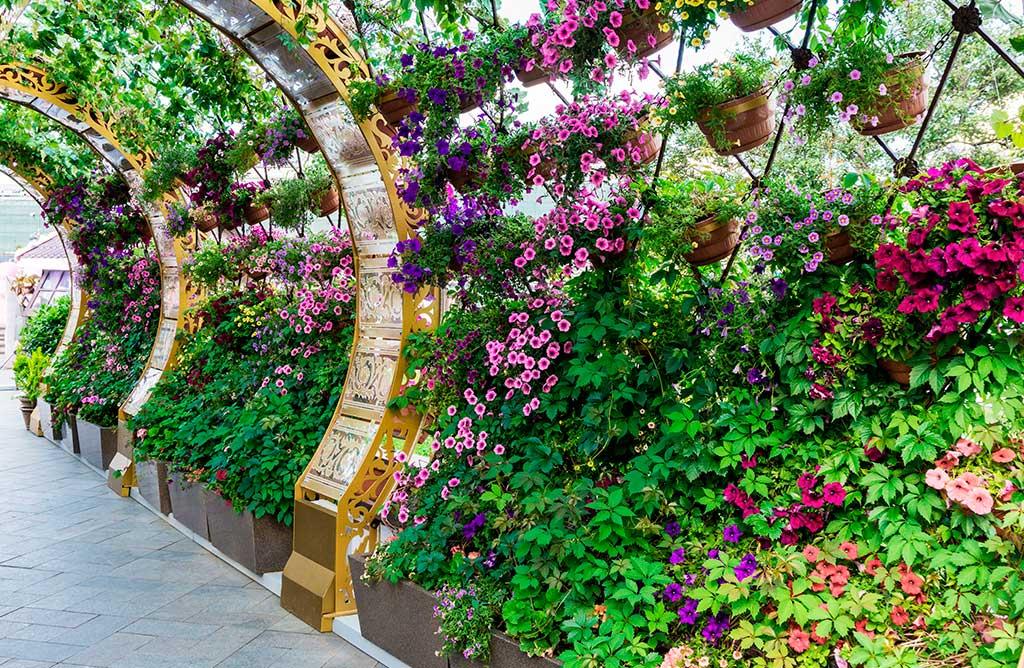 barriera piante privacy