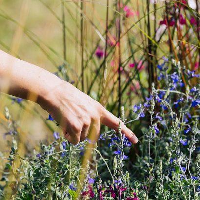 mano indica fiori