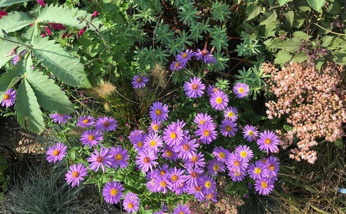 fiori orticola milano
